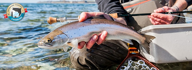 sea trout fishing on fyn guiding