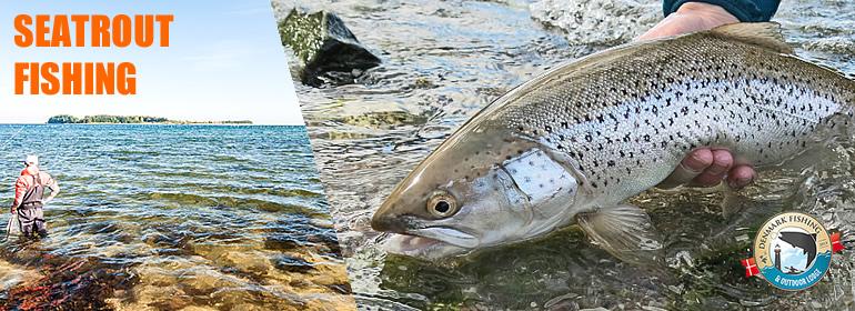 Pesca alle trote di mare seatrout fyn